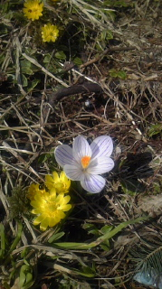 やっと、春