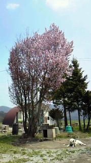 春がきた…やっと