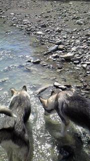 まだまだ川遊び