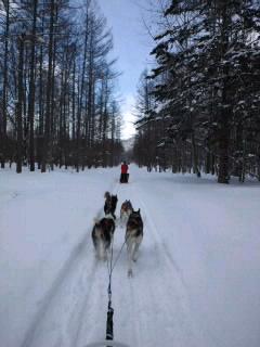 犬橇の一日 抄
